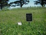 Warren Township Cemetery Spring