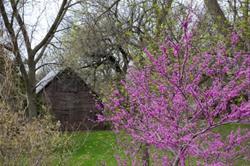 Spring at Voas