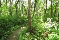Squaw Creek Park Trail Photo