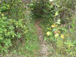 SCP Equestrian Trail