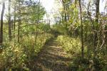 Wickiup Hill Natural Area