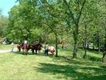 Equestrial Trails and Campgrounds are found throughout Iowa