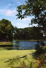 Arney Bend Area 8