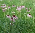 Prairie Remnant