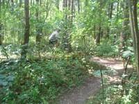 Scott County Park Trail
