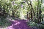 Dickson Equestrian Trail