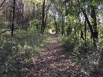 Interpretive Hiking Trail at Sutcliffe Woodland
