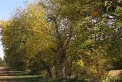 North Cedar Natural Area