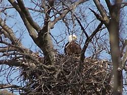 Eagle Nest Cedar River
