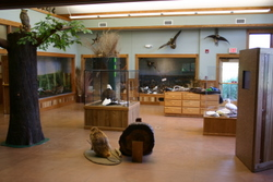 Conservation Center Display Area
