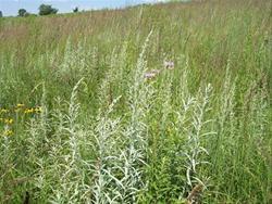 Hale Prairie Restoration Area