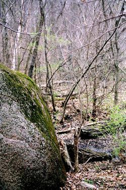 Grammer Grove Wildlife Area Marshall Ia