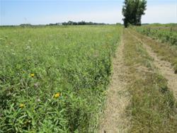 View of Prairie
