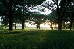 Kenue Park