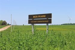 Mori Prairie