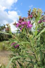 Trail wildflower