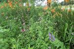 Mile Hill Lake Wildflowers