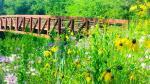 Bridge along Trout Run Trail