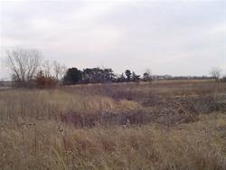 Patton Prairie