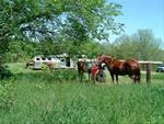 Equestrian Camping & Trails - Matsell Bridge Natural Area, Linn County, IA