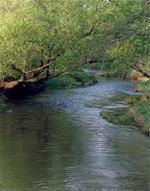 Lime Creek
