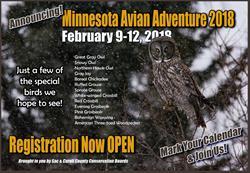 Minnesota Avian Adventure