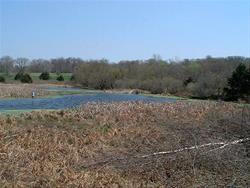 wetland at Millard Preserve