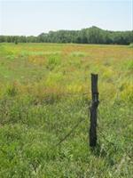 E.C. Lippke Wetland
