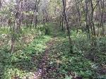 Hiking Trail at Sutcliffe Woodland